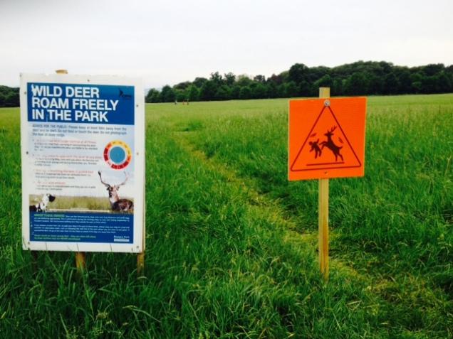 Deer sign2